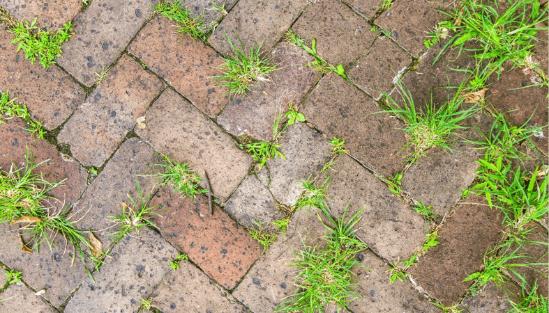 Aardoom Hoveniers strijdt duurzaam tegen onkruid
