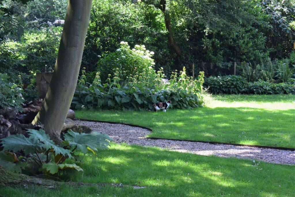 Tuin VvE Rotterdam - nieuwe situatie - terras met schelpen