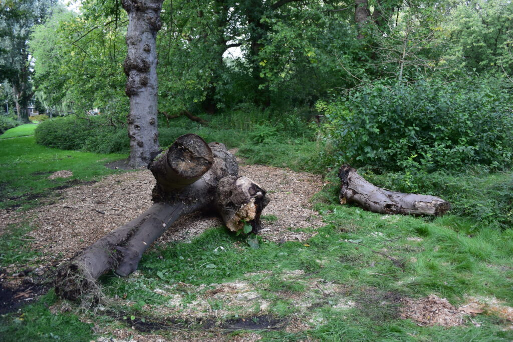 speelplek met boomstammen
